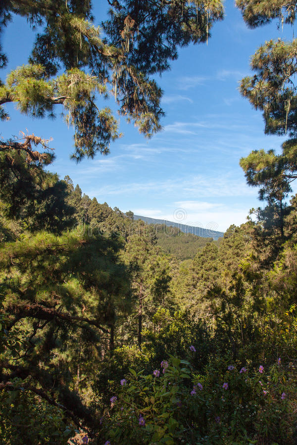 Free La Orotava Valley Of Teneriffe Royalty Free Stock Image - 31834216