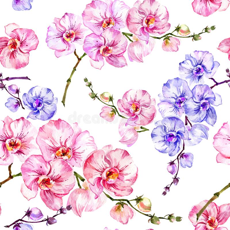 La orquídea azul y rosada florece en el fondo blanco Modelo floral inconsútil Pintura de la acuarela Ilustración drenada mano libre illustration