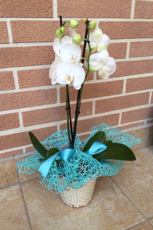 la orquídea blanca imágenes de archivo libres de regalías