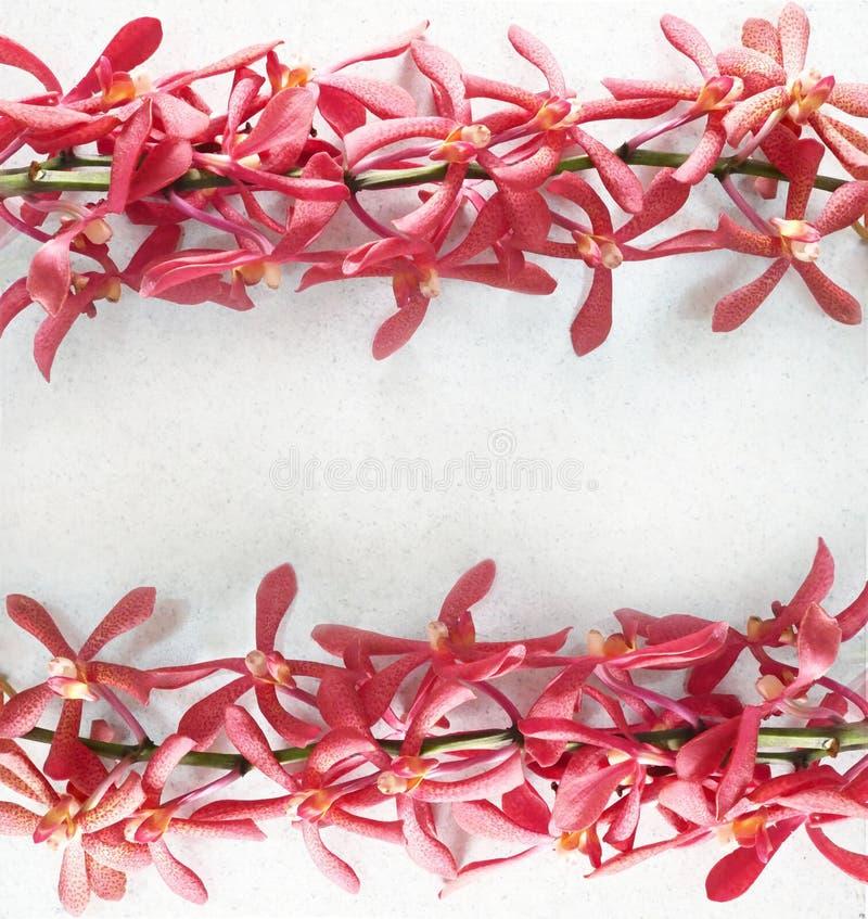 La orquídea de la primavera florece el marco imagen de archivo