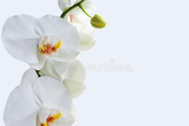 La orquídea florece el fondo imágenes de archivo libres de regalías