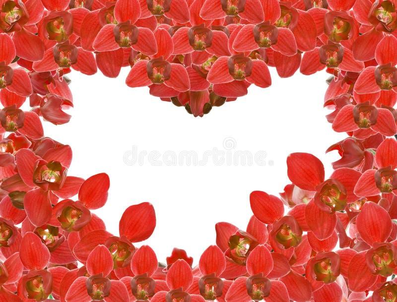 La orquídea roja florece el marco de la forma del corazón en blanco imagenes de archivo