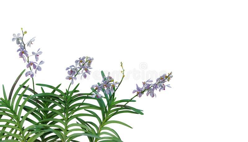 La orquídea salvaje florece con las hojas verdes en la ISO tropical de la selva tropical fotografía de archivo