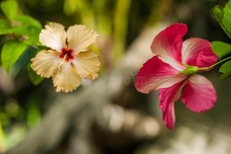 La orquídea tropical del flor de las flores florece el ramo foto de archivo libre de regalías