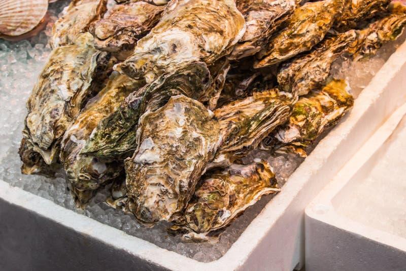 La ostra fresca en una caja blanca de la espuma con hielo en el mercado de Kuromon Ichiba imagen de archivo