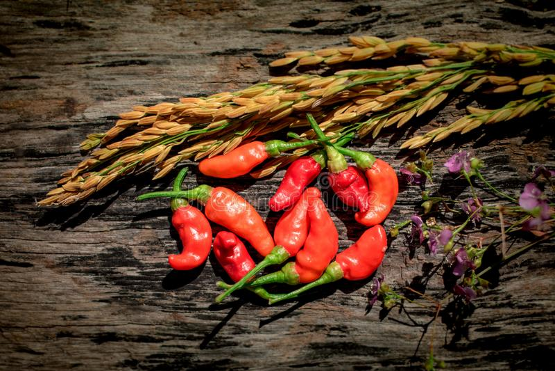 La púrpura florece el fondo de oro de madera del arroz del chile rojo fotos de archivo libres de regalías