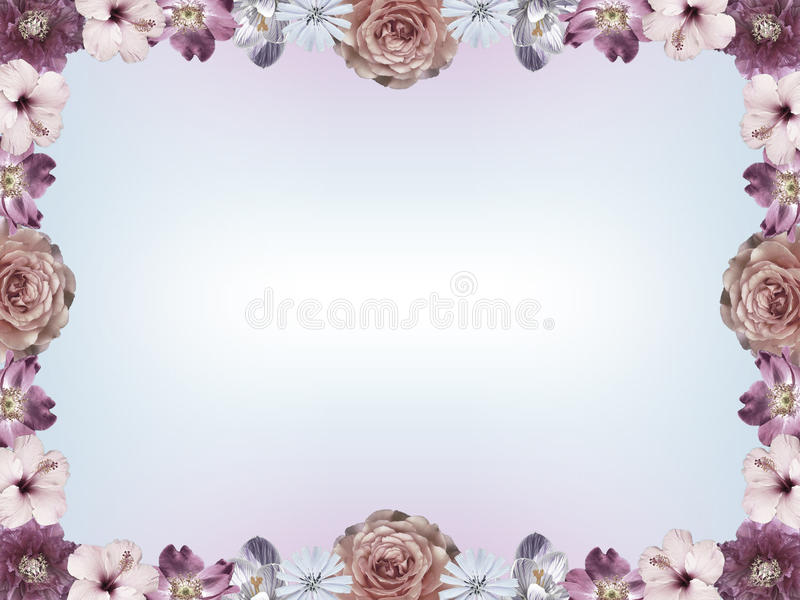 La pagina con i fiori colorati pastelli e la pendenza di colore copia lo spazio immagini stock