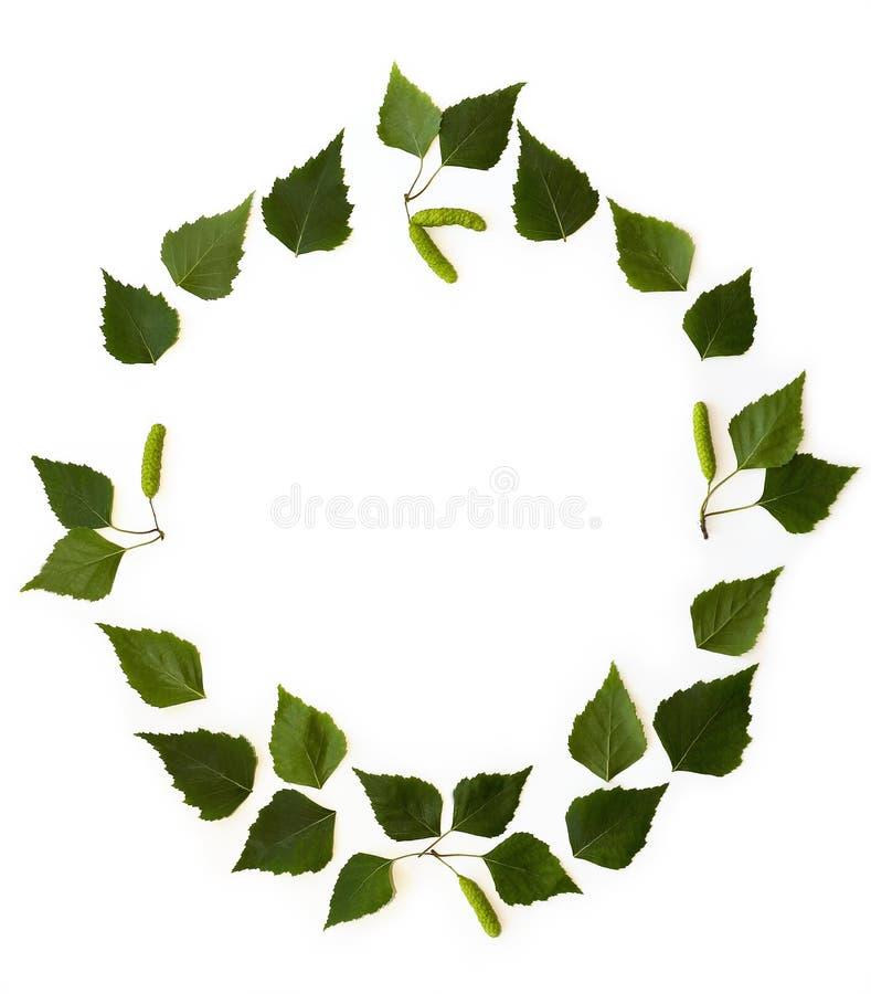 La pagina con la betulla verde va su fondo bianco fotografia stock