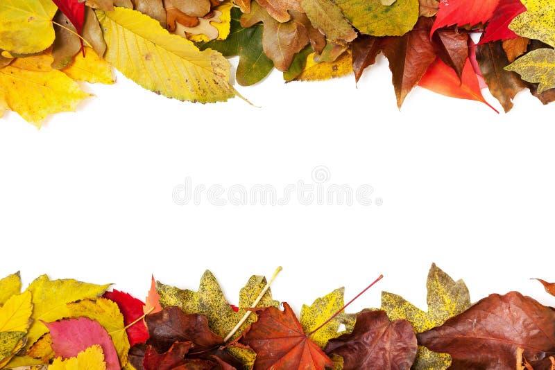 La pagina consiste di due strisce degli alberi variopinti delle foglie di autunno royalty illustrazione gratis