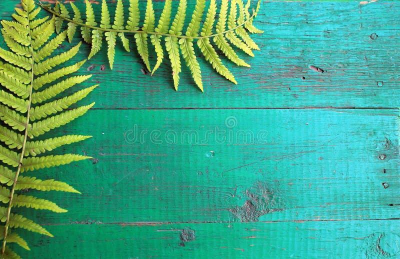 La pagina dalla felce fresca va sul BAC di legno dipinto anziano del turchese immagini stock