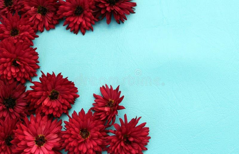 La pagina fatta del crisantemo fiorisce su un fondo blu fotografia stock libera da diritti