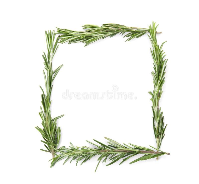 La pagina ha fatto dei ramoscelli freschi dei rosmarini su fondo bianco, vista superiore fotografia stock