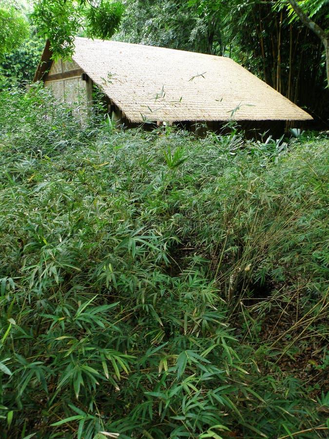 la paille de hutte de forêt a couvert de chaume photo libre de droits