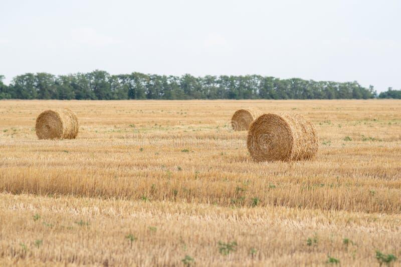 La paille roule dans un domaine après récolte de blé image libre de droits