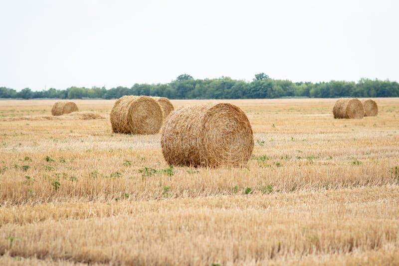 La paille roule sur un champ de blé fauché photo stock