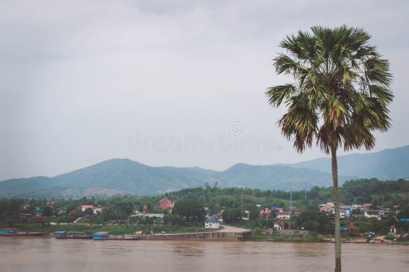La palma de azúcar está cerca del río Mekong imagen de archivo libre de regalías