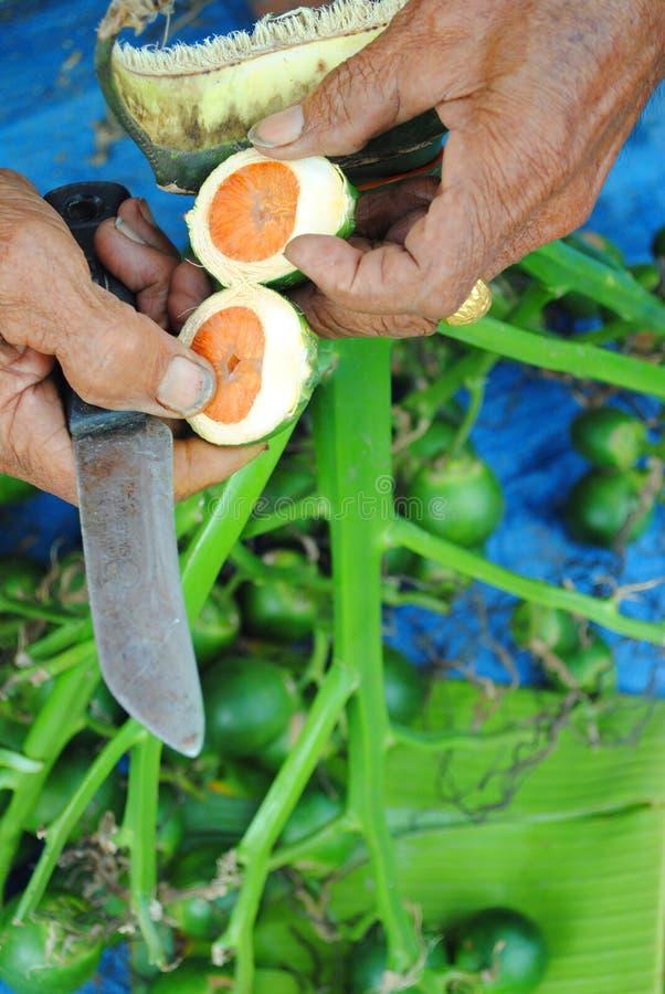 La palma di betel fotografie stock libere da diritti