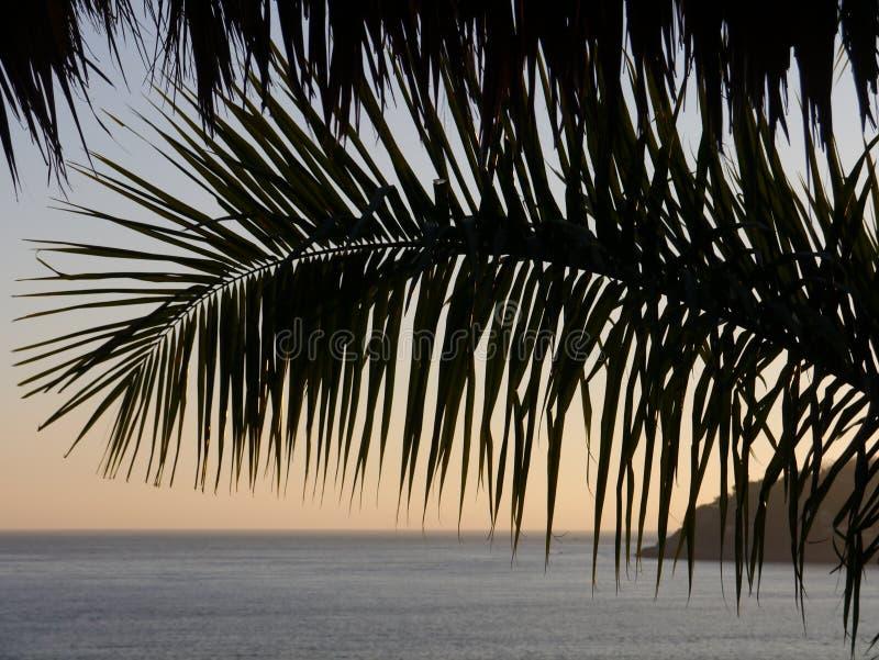 La palma encariñada cuelga sobre escena del océano durante última hora de la tarde imágenes de archivo libres de regalías