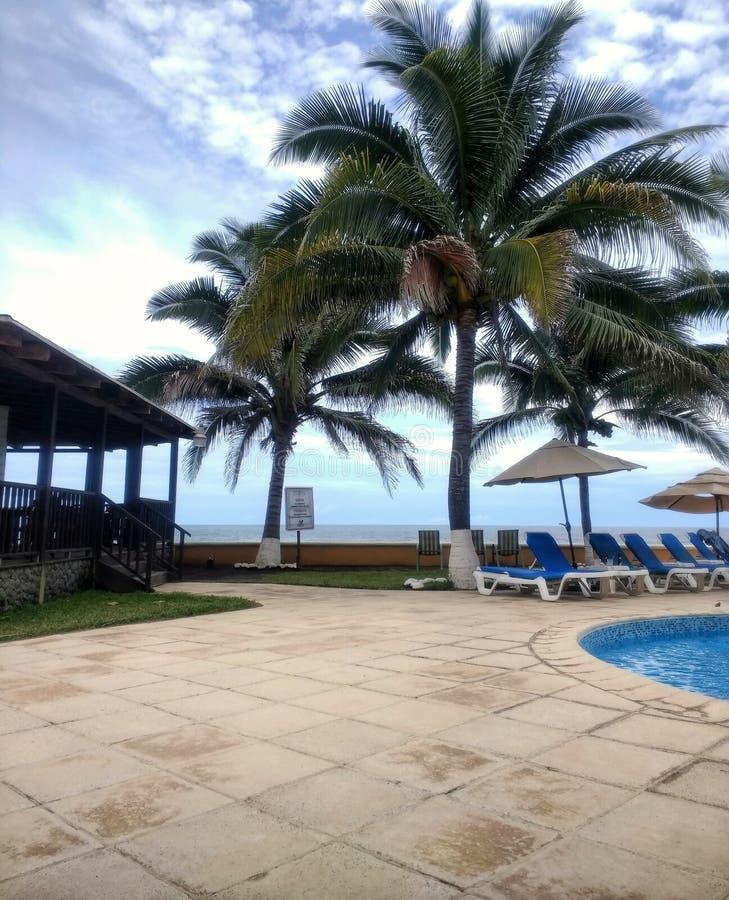 La palma, gli alberi, lo stagno e una capanna tutta è alla spiaggia immagini stock libere da diritti