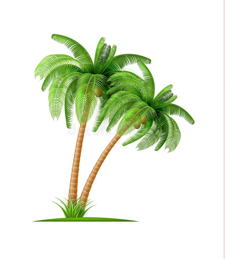 La palma realistica con le noci di cocco Vector 3d esotico illustrazione di stock