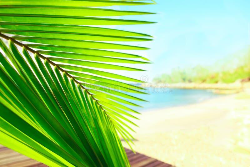 La palma rimane il fondo tropicale pacifico della spiaggia, carta blu del paesaggio del mare immagine stock libera da diritti