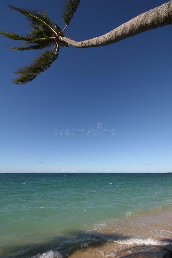 La palma sporge l'oceano con le ombre nella sabbia fotografie stock libere da diritti