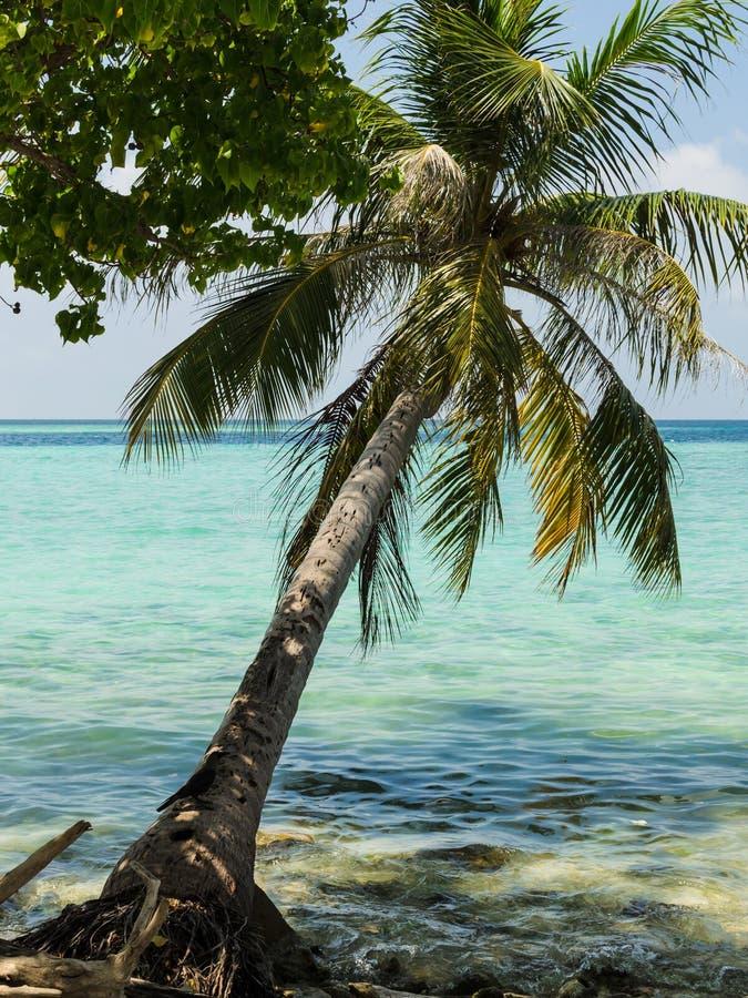 La palma sull'oceano, l'acqua del turchese, nuvole leggere nel cielo sopra l'orizzonte allinea Le Maldive, Oceano Indiano immagine stock