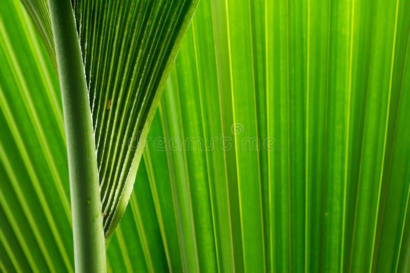 Download La palmera sale de I imagen de archivo. Imagen de árbol - 44850641
