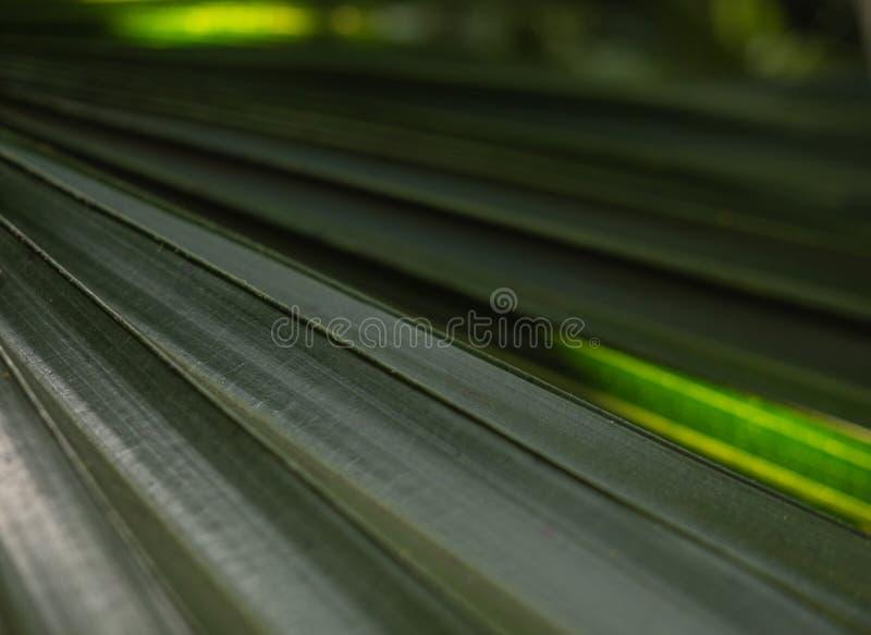La palmera verde se va con el contraluz que brilla con la textura imagen de archivo libre de regalías