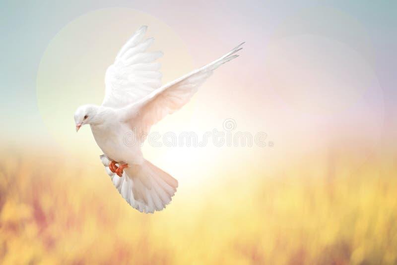 La paloma del blanco vuela en pastel foto de archivo libre de regalías