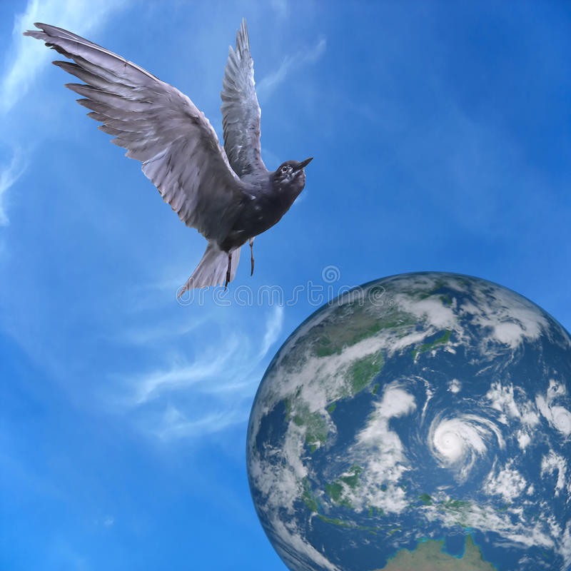 La paloma se zambulló volando sobre la tierra, el cielo azul y las nubes imagen de archivo