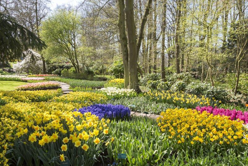 La panoramica di Keukenhof nella primavera con molti fiori abbellisce fotografia stock libera da diritti