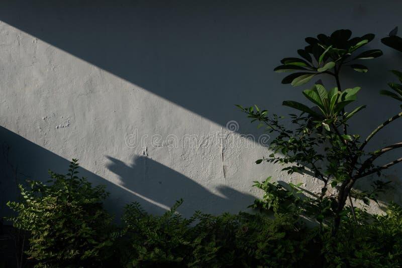 La pared blanca del jardín con algunas plantas verdes y árboles del frangipani con las sombras de la luz de la mañana fotos de archivo