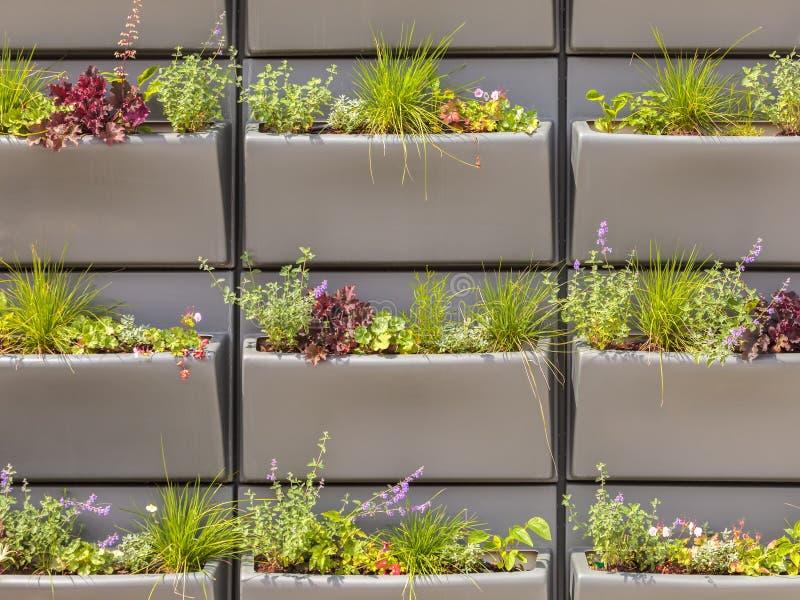 La pared con filas de cestas plásticas llenó de las plantas fotos de archivo libres de regalías