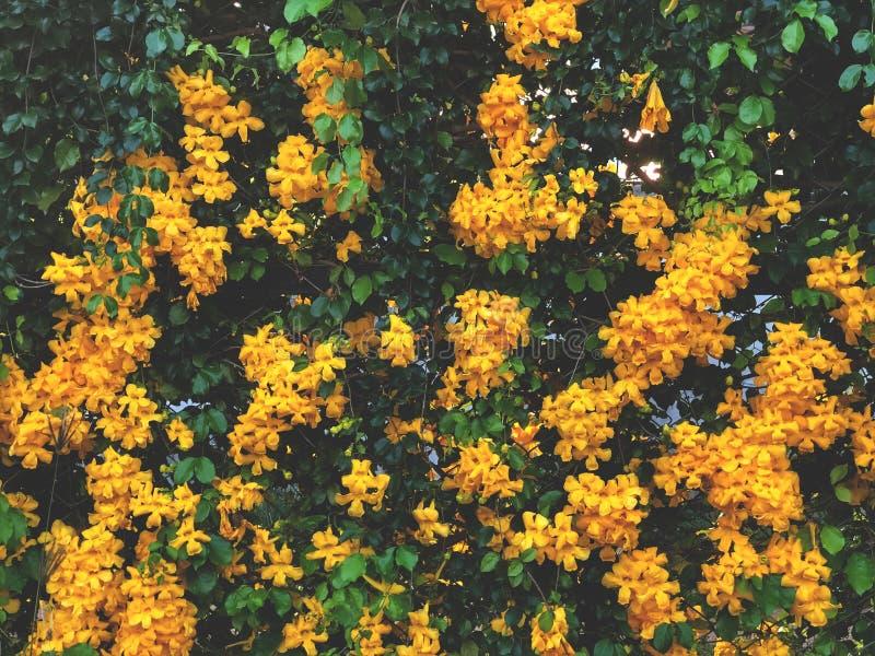 La pared del verde de la naturaleza se va y fondo amarillo de las flores imagen de archivo