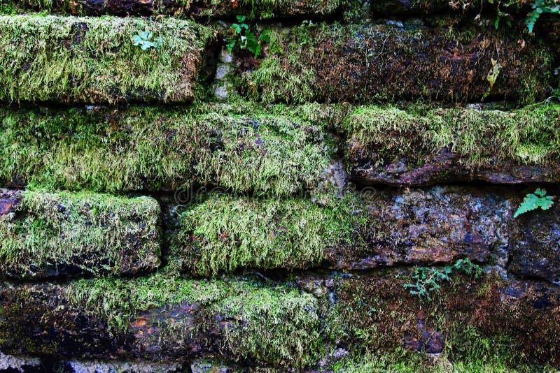 La parete dai mattoni con muschio verde per fondo fotografia stock libera da diritti