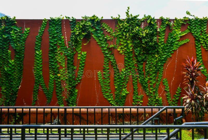 La parete decora con le foglie verdi dalla pianta come il bastone su  fotografia stock libera da diritti