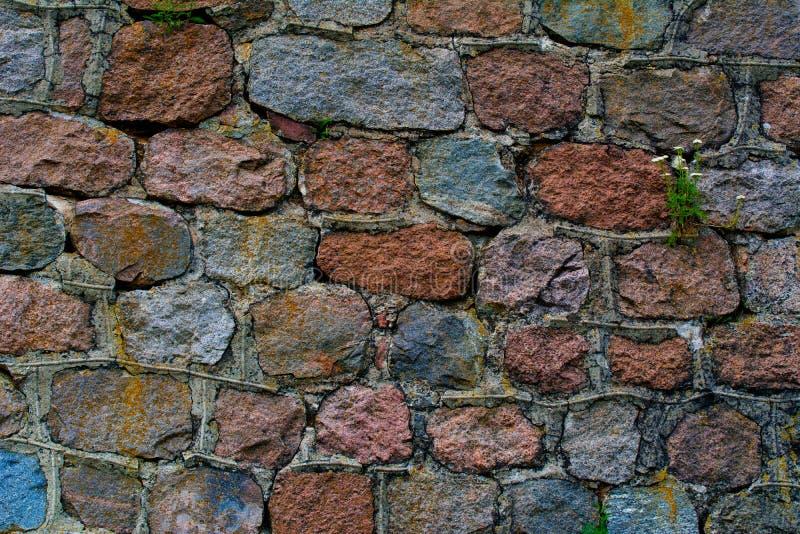 La parete del seminterrato del fondo di gray spaccata ha scheggiato i grandi campioni dell'erba dello stoneswith fotografie stock