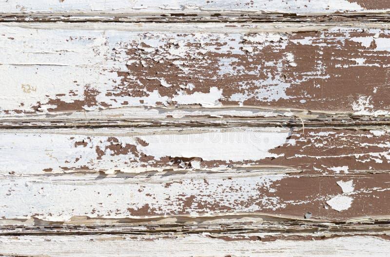 La parete di legno di struttura di lerciume con pittura bianca sta sbucciando severamente il fondo astratto di vecchio stile fotografie stock libere da diritti