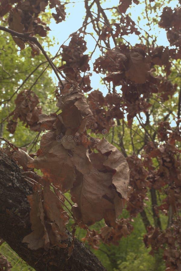 La partícula del otoño es adyacente a la primavera técnica de la imagen del retro-estilo imagen de archivo libre de regalías