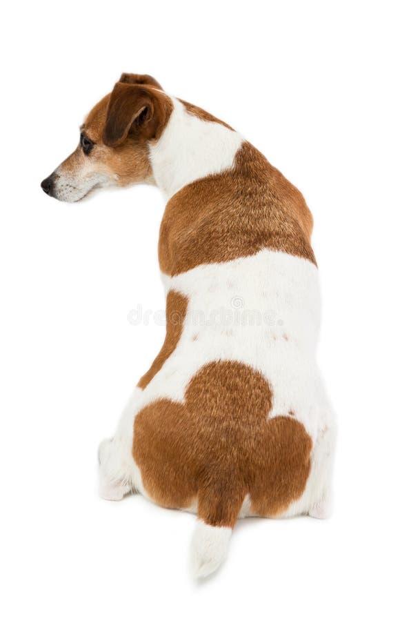 La parte posteriore del cane, asino, natiche fotografie stock libere da diritti