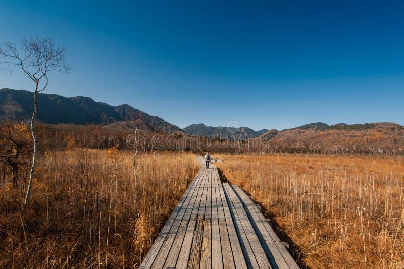 La parte posteriore dell'alpinista, autunno al plateau di Senjogahara nel parco nazionale di Nikko, Nikko Tochigi, Giappone immagine stock libera da diritti
