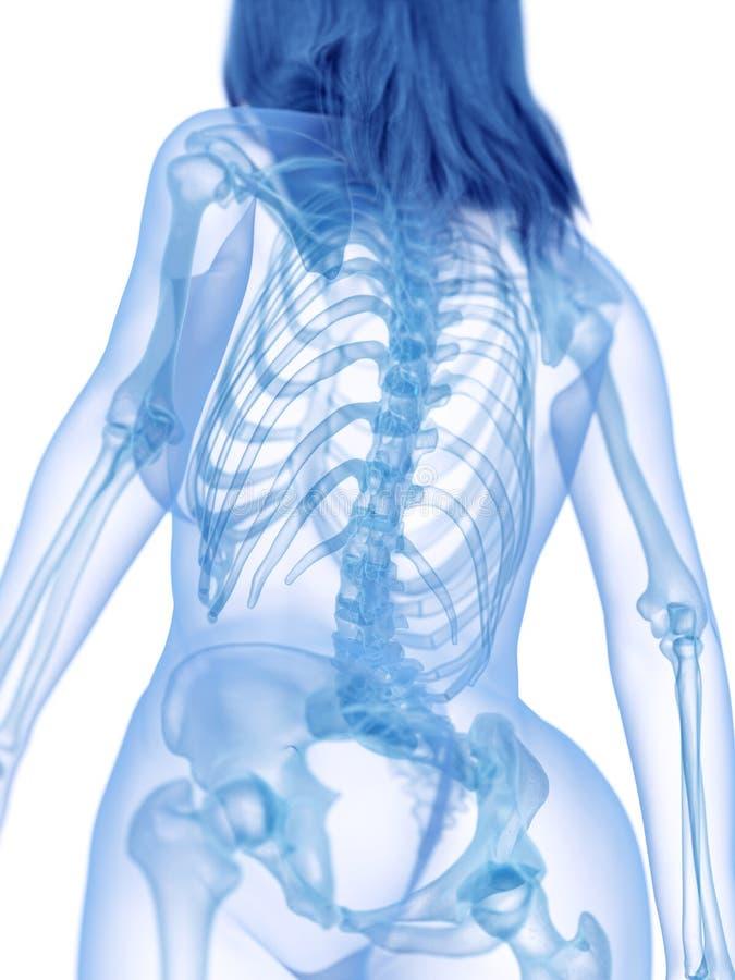 La parte posteriore scheletrica illustrazione di stock
