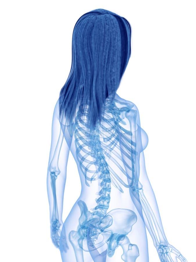 La parte posteriore scheletrica illustrazione vettoriale