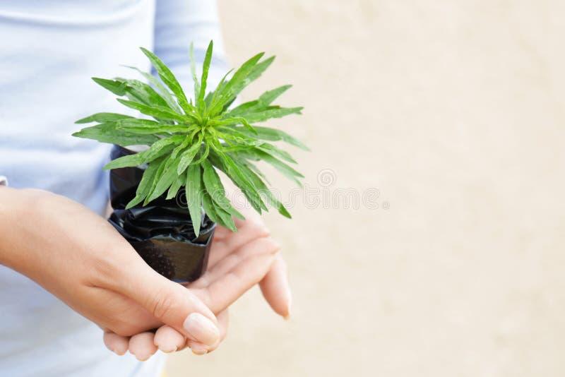 La participation de femme a écrasé la boîte en fer blanc avec la jeune plante verte photographie stock libre de droits