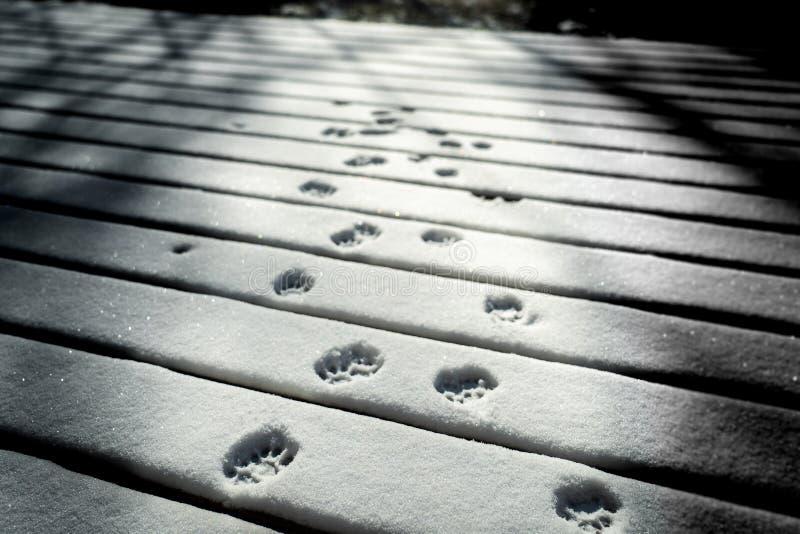 La pata del gato imprime en nieve fotografía de archivo libre de regalías