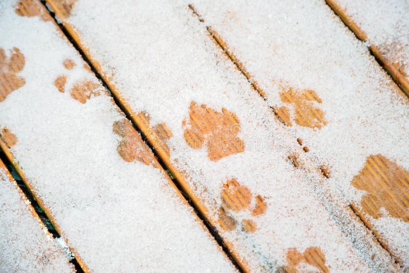 La pata del perro imprime en el hielo, nieve en decking de madera imagen de archivo
