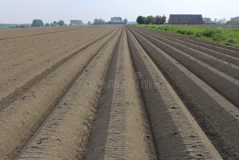 La patata desnuda simétrica coloca en Holanda en primavera imagen de archivo libre de regalías