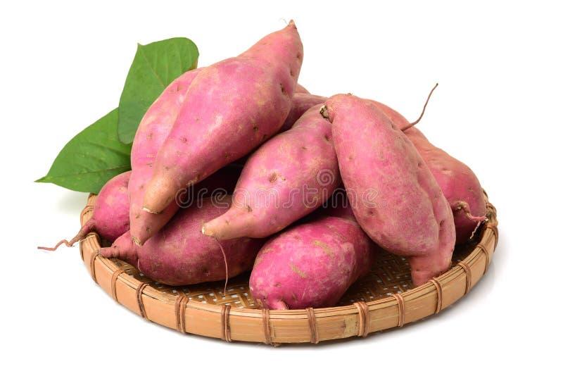 La patate douce ipomoea batatas ou batat photos libres de droits