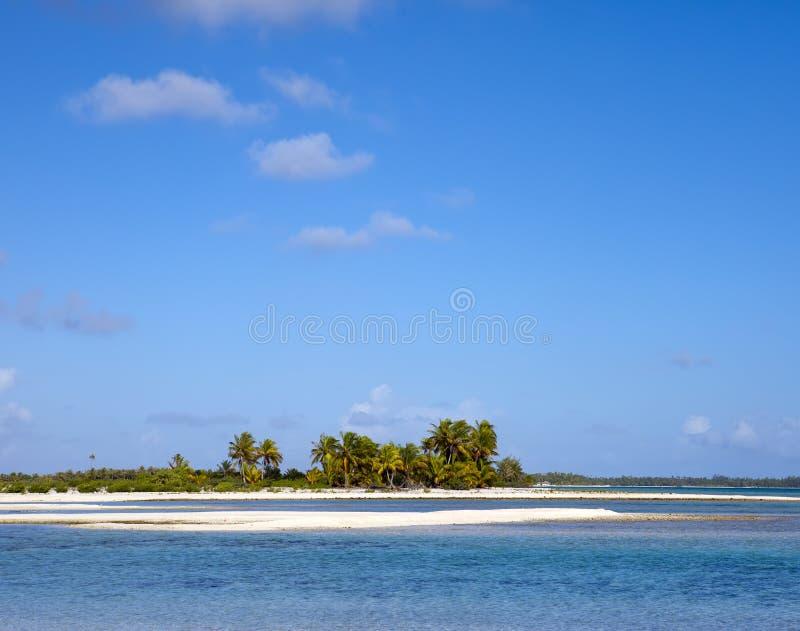 La paume arénacée de bord de la mer sur l'île tropicale images libres de droits